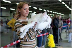 cats-show-24-03-2012-fife-spb-www.coonplanet.ru-101.jpg