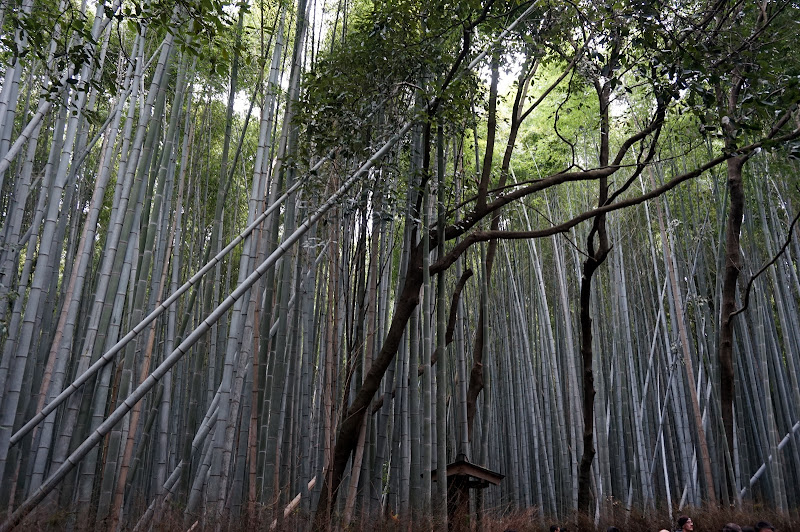 DSC07624 - Bamboo grove
