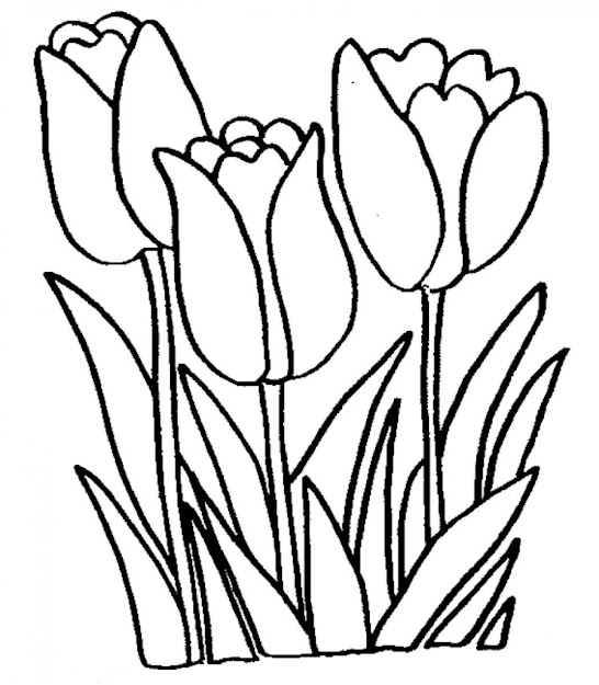Tulip Coloring Pages Free Printable