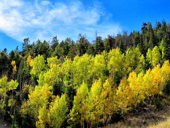 Colorful aspen just above Wattis