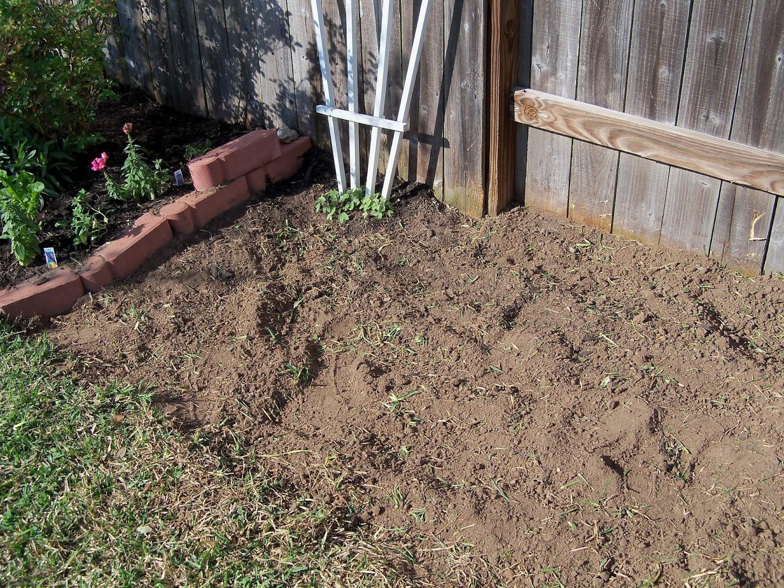 Gardening 2011 - 100_6697.JPG