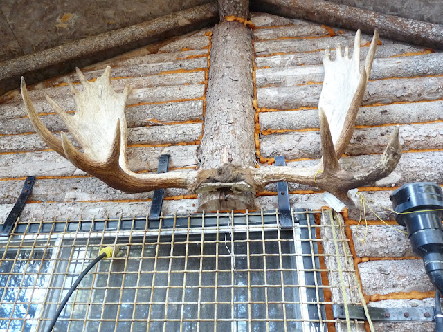 antlers on the outside wall of camp
