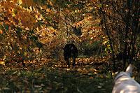 runaway dog