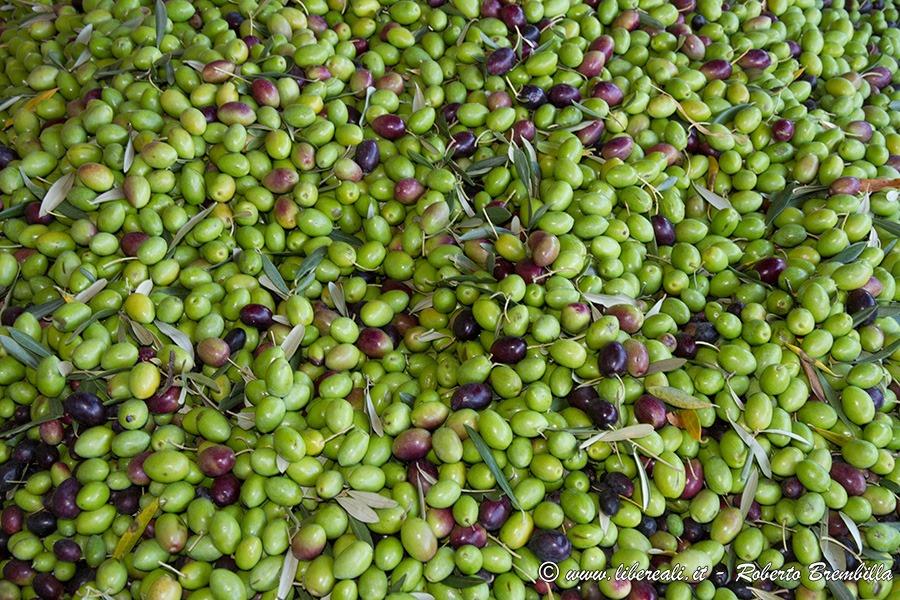 [43_Frantolio-Olive-Biosio-Bellano_005%5B4%5D]