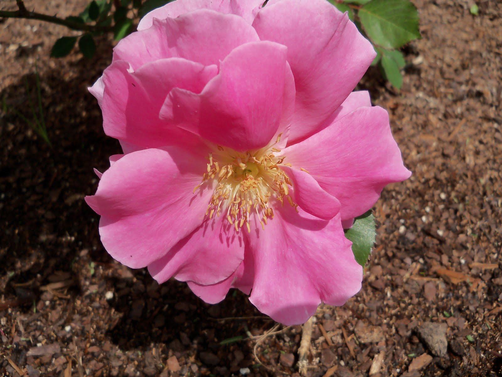 Gardening 2010 - 101_0696.JPG