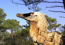 velociraptorAB