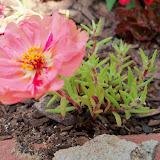 Gardening 2010 - 101_1635.JPG