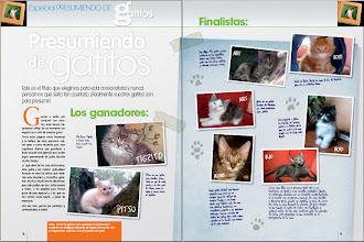 Photo: ARIES MONTEGANCEDO*ES Finalista Concurso Mr. Gatito organizado por Revista el Gato en Casa (Septiembre 2008)