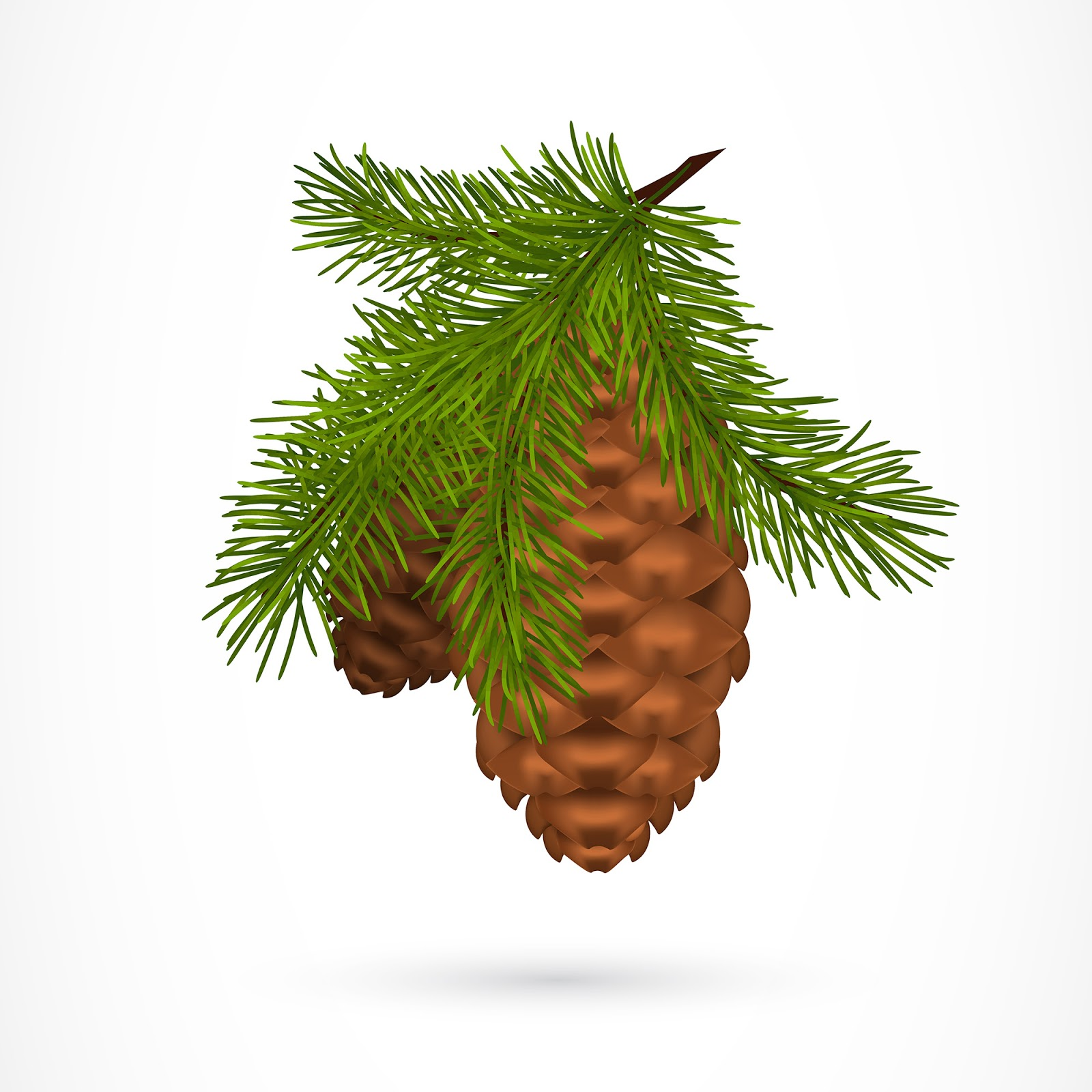Twig With Pine Cones Free Download Vector CDR, AI, EPS and PNG Formats