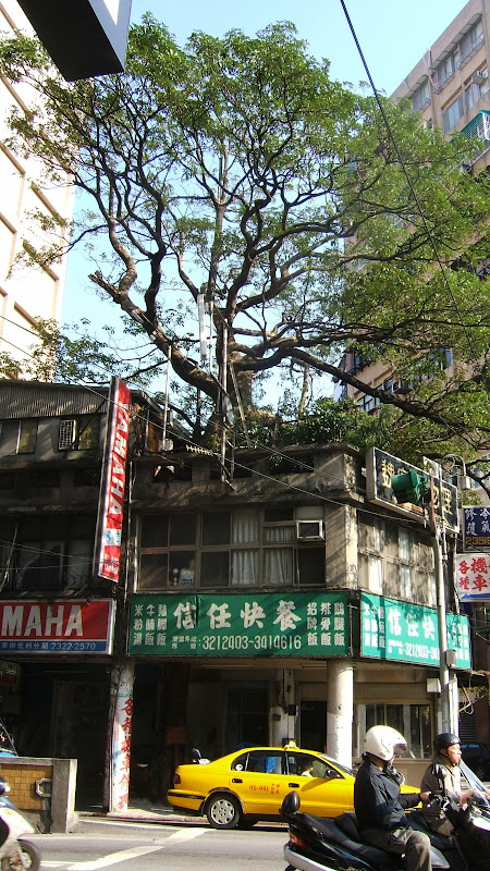 Taipei. this tree is really inside the building
