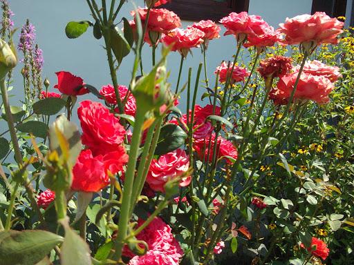 Fotos roemenie zomer van mobiel 2015 juli augustus 020.jpg