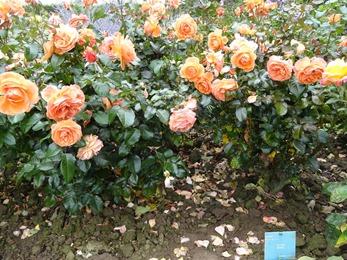 2017.08.10-034 la roseraie des vivaces