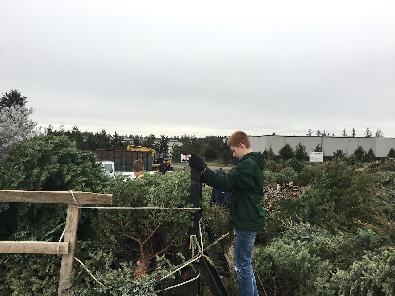 Christmas Tree Pickup - January 2017 - IMG_7006.JPG