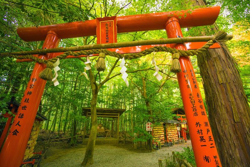 京都 野宮神社 紅葉 写真3