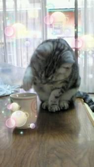 水に前足を入れる子猫