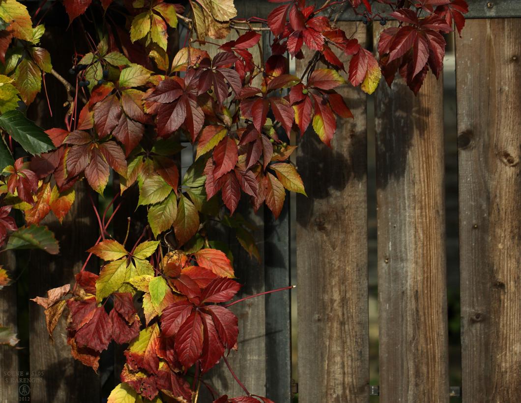 photo, виноград, фото, autumn, осень, grapevines,