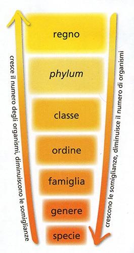 categorie sistematiche