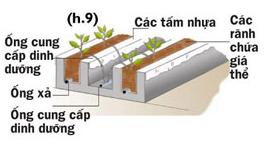 Các cách trồng rau thủy canh - 56874bc9c63e7
