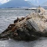 Lobos marinhos, Passeio de barco no Estreito de Magallanes, Ushuaia, Argentina