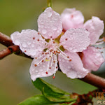 Flower 022_1280px.jpg