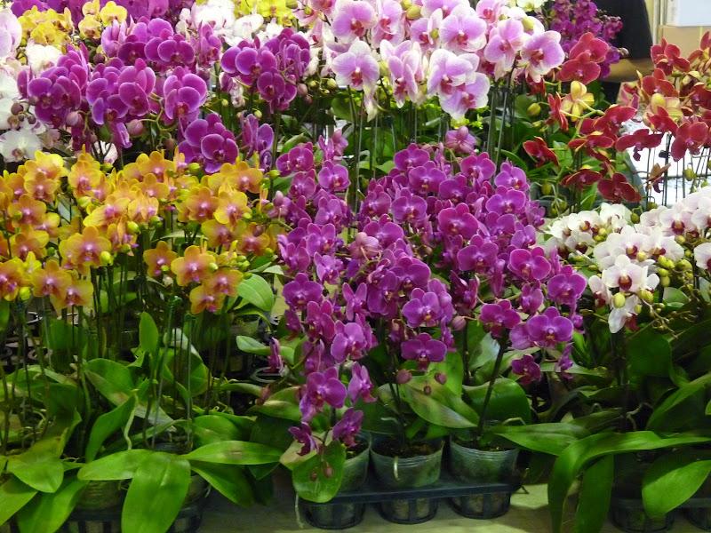 TAIWAN. Taipei Jade Market - P1160116.JPG