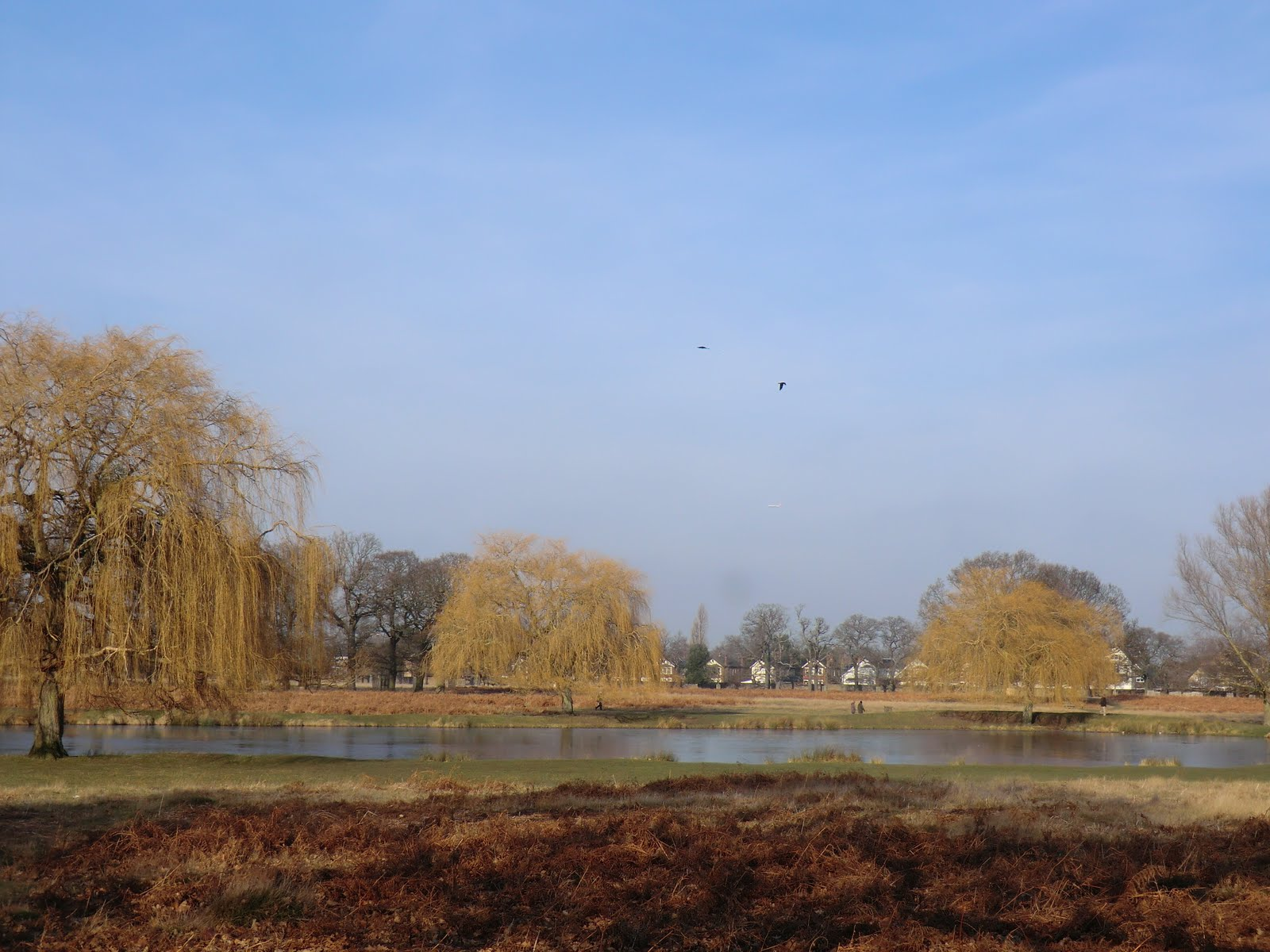 CIMG6446 Leg-of-Mutton Pond, Bushy Park