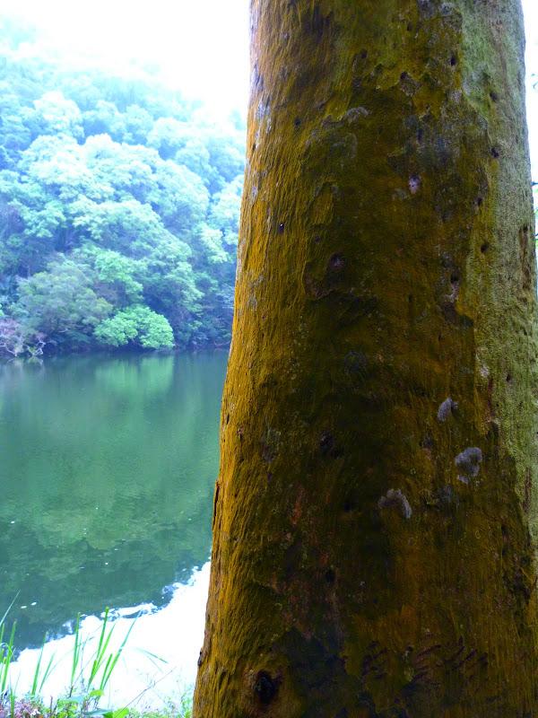 TAIWAN Taoyan county, Jiashi, Daxi, puis retour Taipei - P1260641.JPG