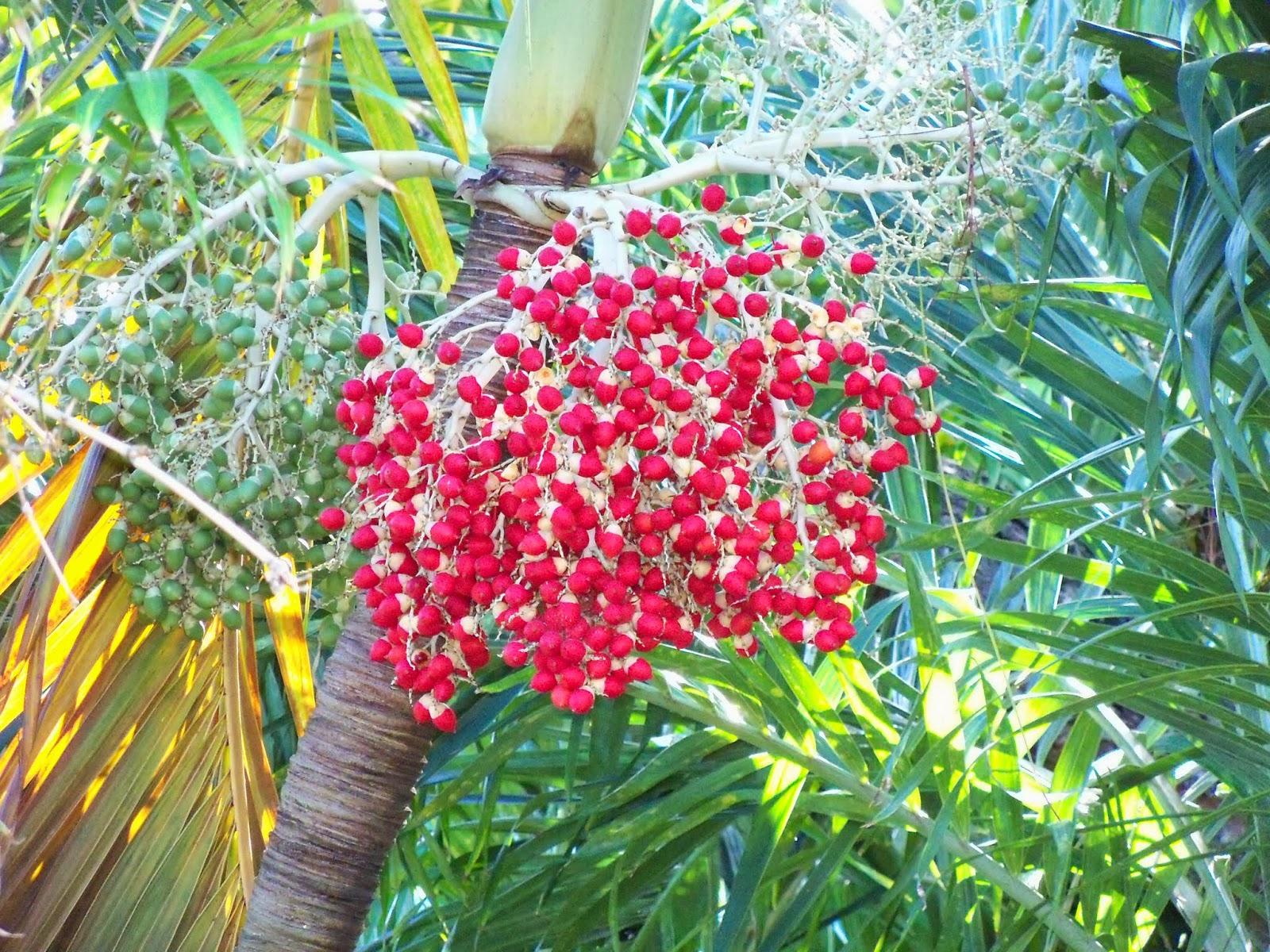 Key West Vacation - 116_5426.JPG