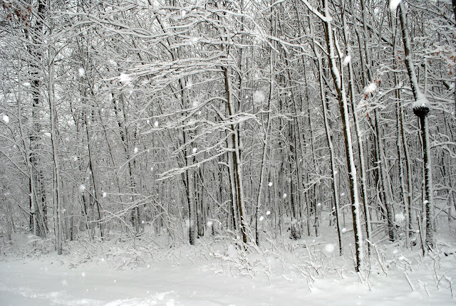Snow in the woods of pennsylvania
