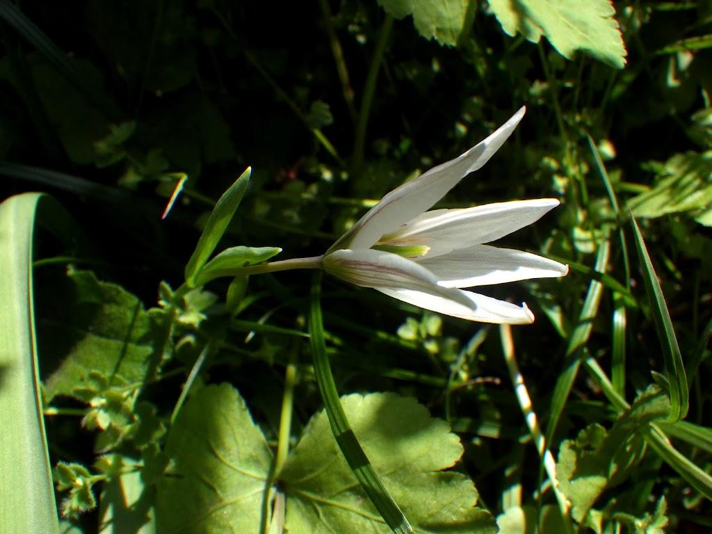 花茎の苞葉