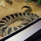 Houston Zoo - 116_8401.JPG