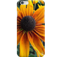 Rudbeckia iphone