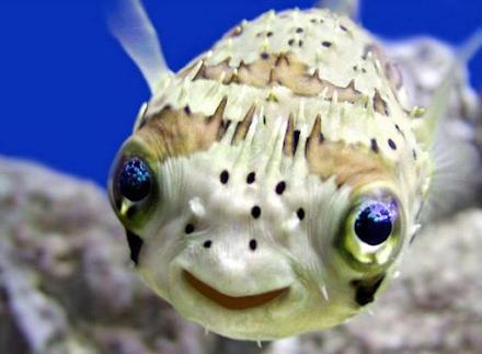 Τα 14 πιο επικίνδυνα ζώα του πλανήτη