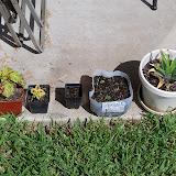 Gardening 2010, Part Three - 101_3853.JPG