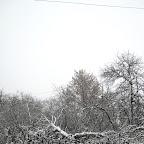 Вырубки ЛЭП в Воронежской Нагорной Дубраве 032.jpg