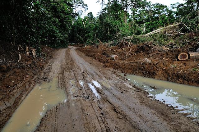 Nouvelle piste et déforestation. Environs d'Ebogo (Cameroun), 29 avril 2013. Photo : Daniel Milan