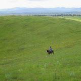 Horses - 1546348_584474411622153_1298815542_n.jpg
