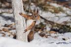 PROFITEZ, JE POSE !?Écureuil en lisière forestière