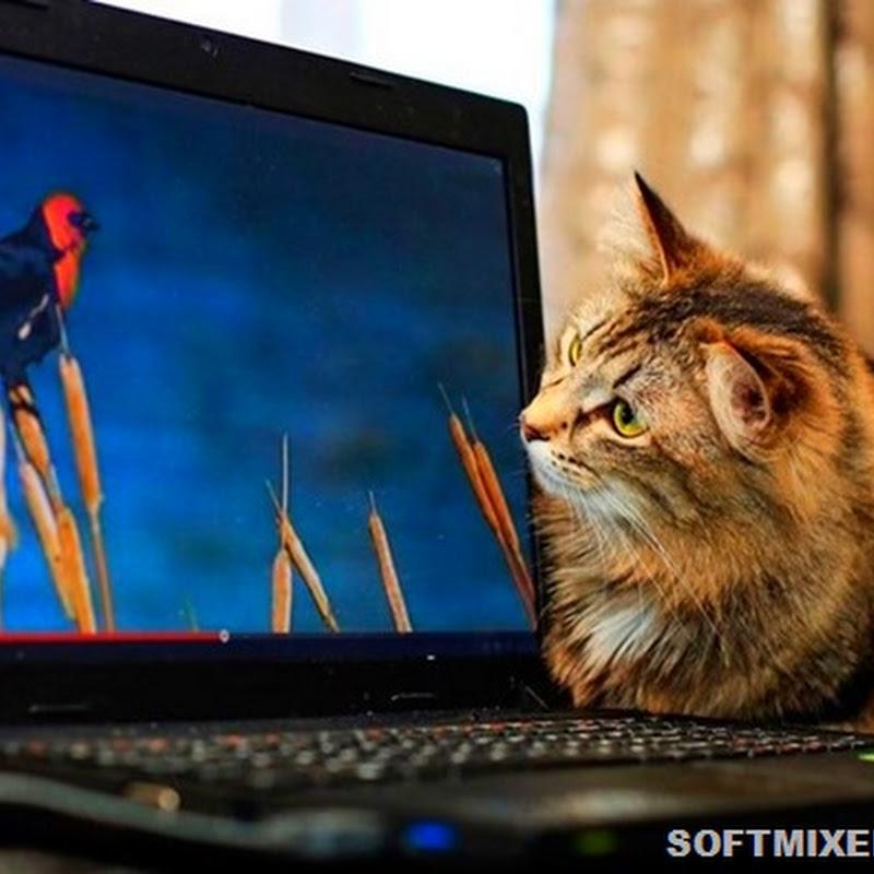 Кошки и современные технологии: тогда и сейчас