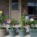 Gardening 2010, Part Three - 101_4958.JPG