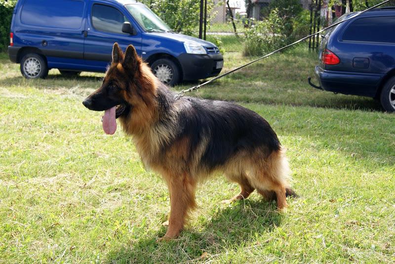 Wystawa psów - dsc00338.jpg