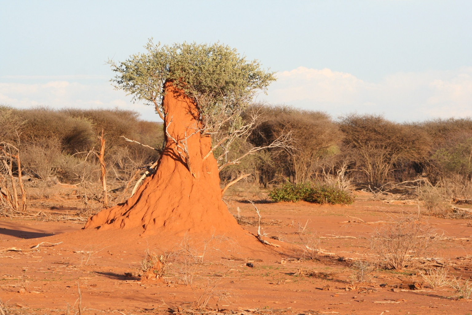 Termites (this one 3 m high)