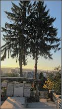 Photo: Turda - conifere din Cimitirul Central - 2018.10.11