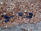 jak se řekne lavina z listí? Listovina?