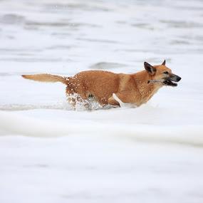 by Felipe Mairowski - Animals - Dogs Playing