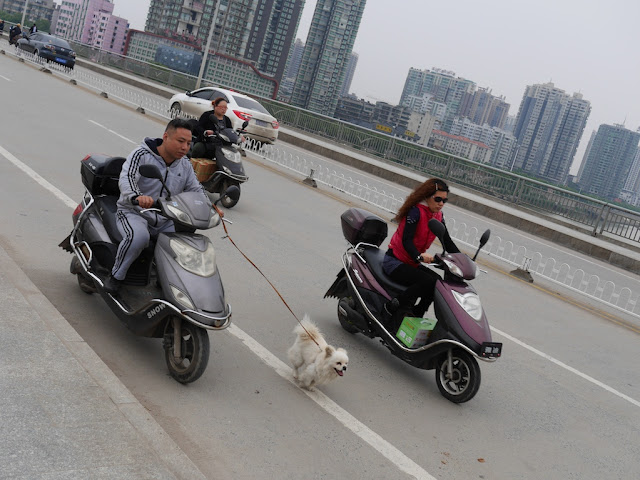 dog running while it is attached by a leash to a moving motorbike in Hengyang, Hunan, China.