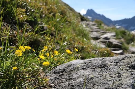 Chodník smerom k Svinici