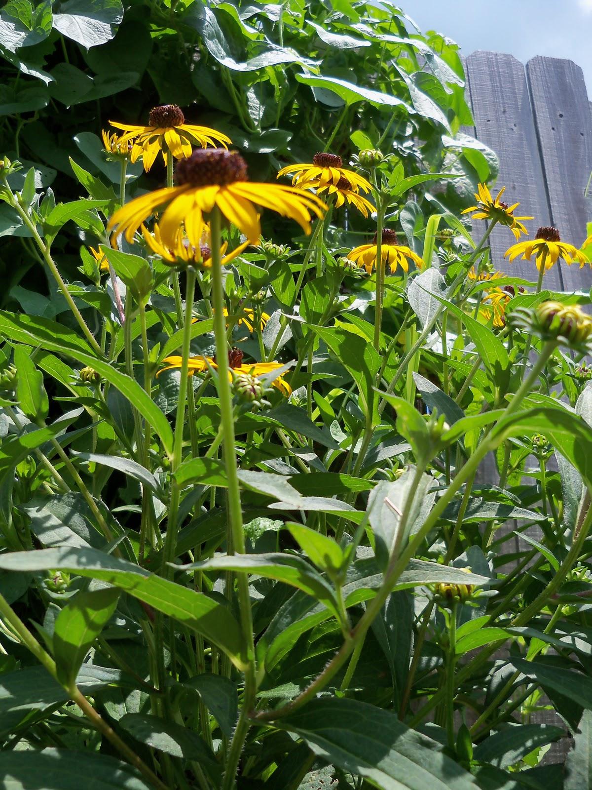 Gardening 2010, Part Three - 101_4852.JPG