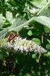 insectos y otros 004.JPG