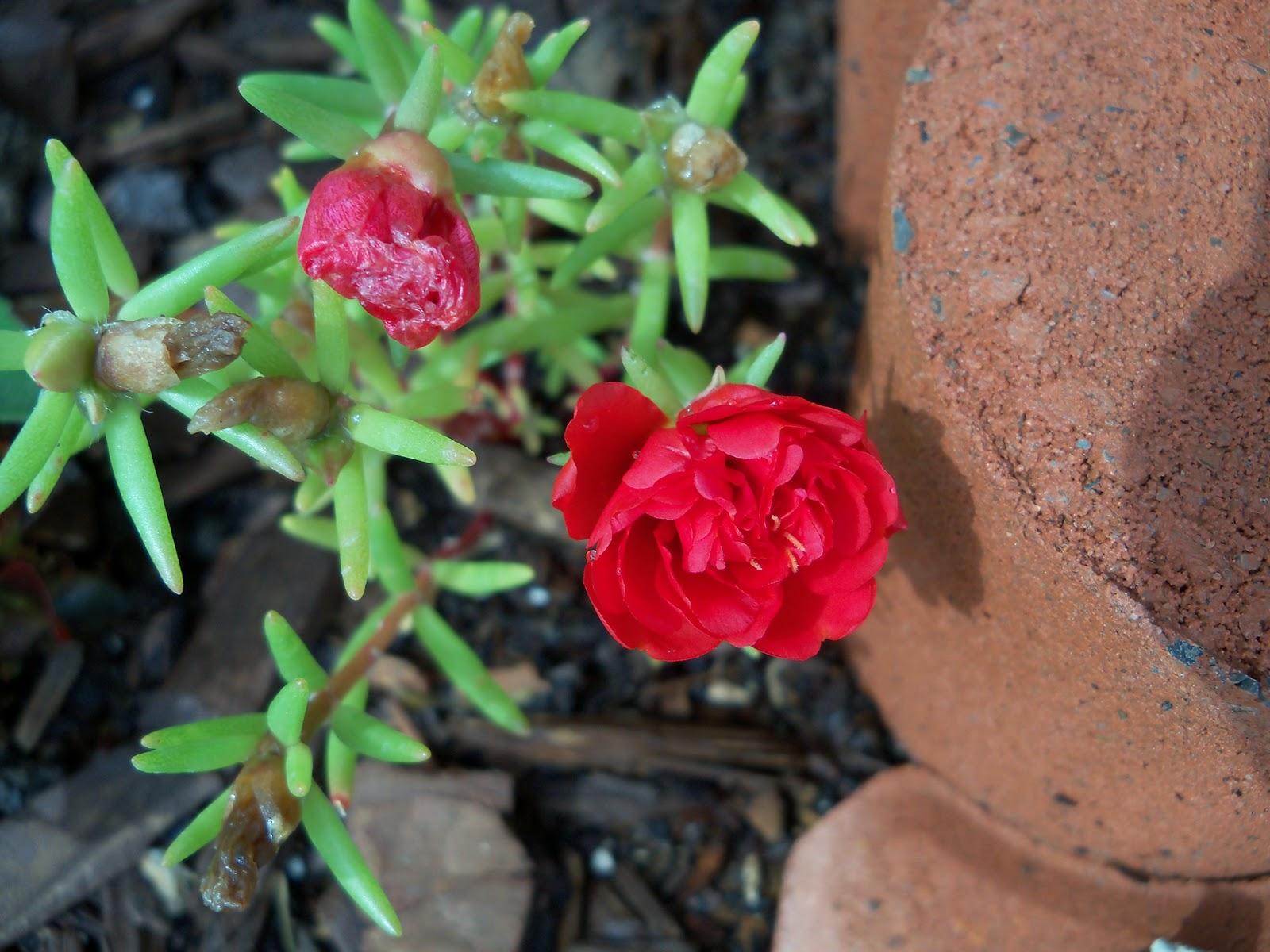 Gardening 2010, Part Two - 101_2169.JPG
